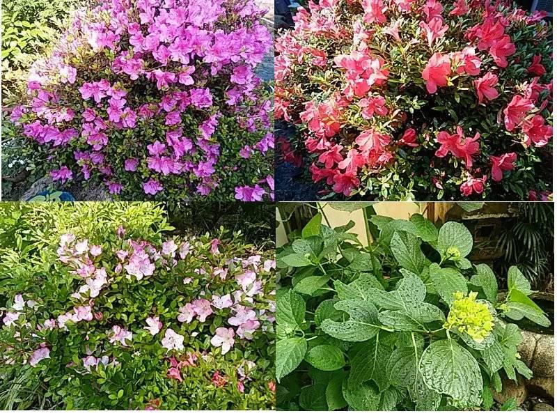 庭の花も木々も・・・
